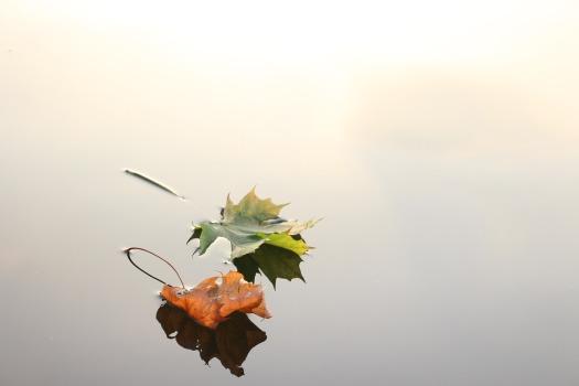 maple-leaves-690233_1920